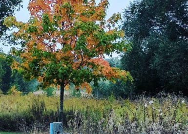 Roselle Fence And Memorial Tree In Fall
